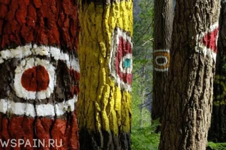 Разноцветный Лес Ома