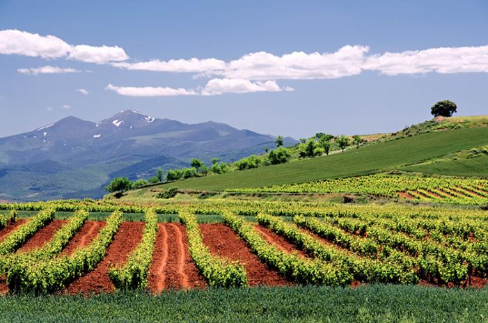 История виноделия Ла Риохи, энотуры в Испании, туры по винодельням Испании