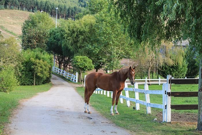 Туры в Кантабрию, Конное ранчо в Испании, Гид в Кантабрии и Сантандере
